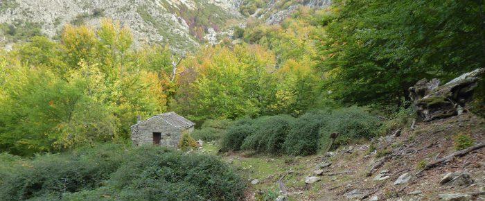 BERGERIES DE CASTAGNU à 1050 mètres d'altitude dans la vallée de la Gravona et du massif du Renosu, sur la commune de Bocognano, en Corse du Sud