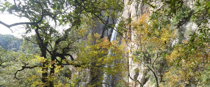 CASCADE DE PISCIA DI GALLU à 820 mètres d'altitude, au fond de la vallée de l'Oso, dans la région de l'Alta Rocca, sur la commune de San Guiovano di Carbini en Corse du Sud